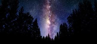 Night Sky Forest