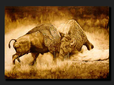 bison fight