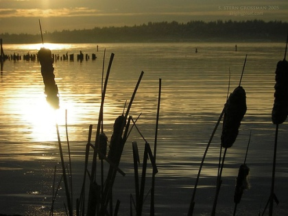 cattails lake