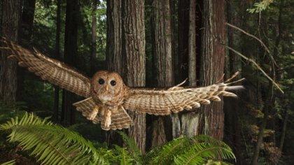forest redwoods